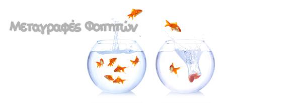 goldfishmetagrafes